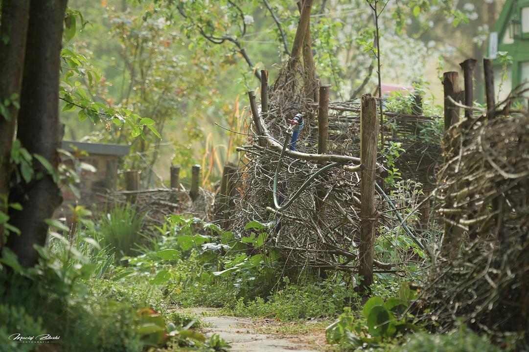 Majówka w ogrodzie