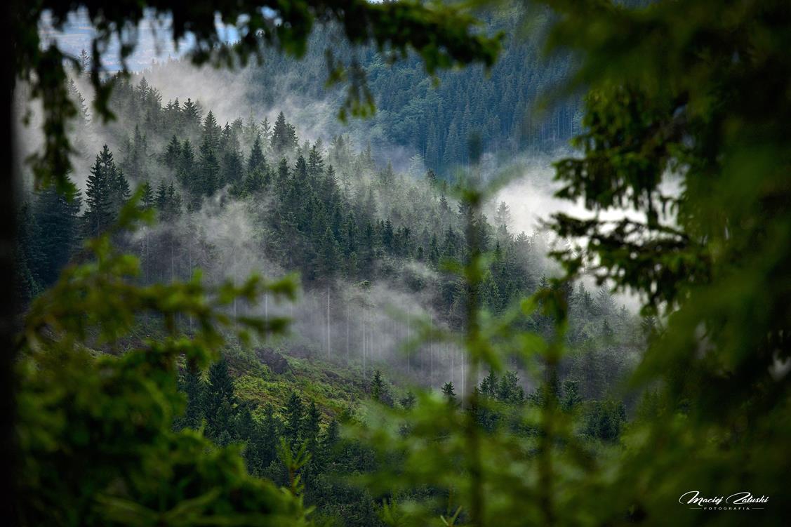 Góry, Śnieżnik, Czarna Góra, Muflon i przyroda.